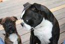 Hank and Rufus